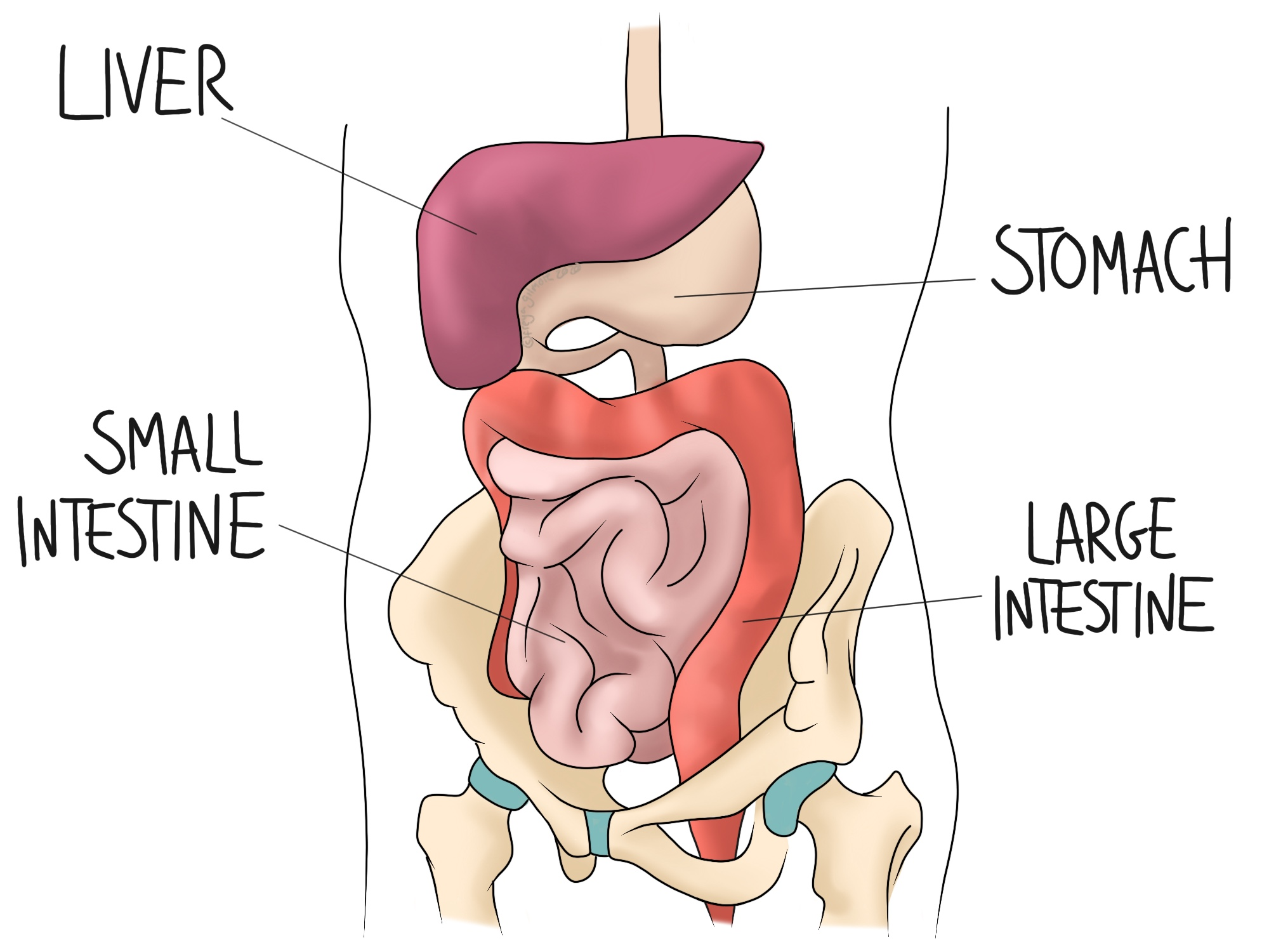 Digestive Problems